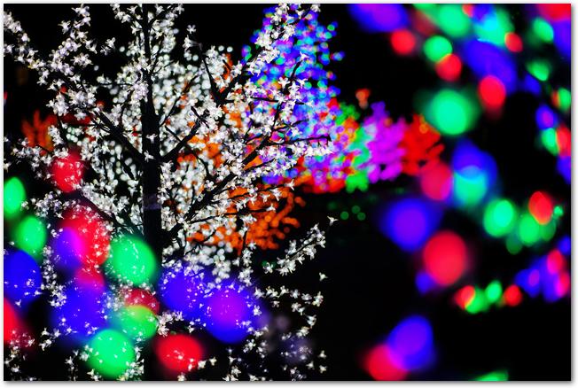 神戸イルミナージュの木々がライトアップされた様子