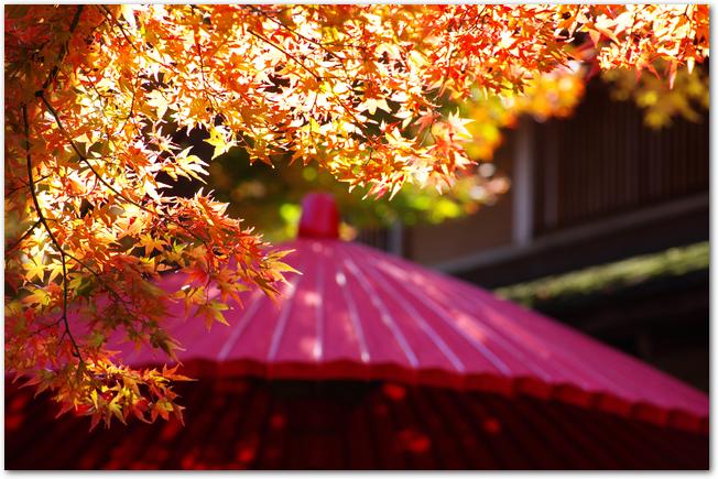箱根美術館の紅葉と赤い和傘