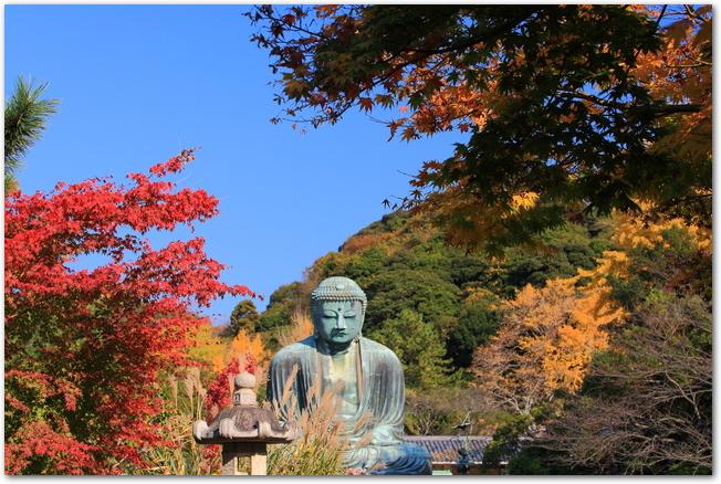 鎌倉の大仏と紅葉の様子