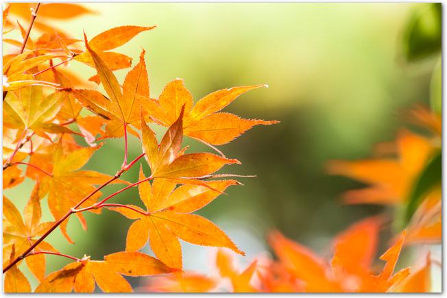 秋をイメージした紅葉の画像