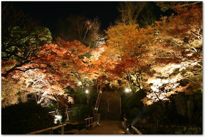 長谷寺の本道のライトアップされた紅葉の様子