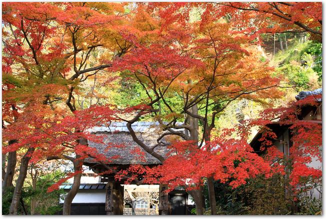 円覚寺の紅葉と山門の風景