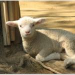 五月山動物園は赤ちゃん連れにおすすめ?ふれあい広場と餌やり体験