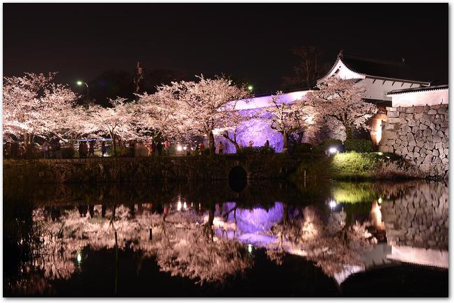 ライトアップされた舞鶴公園の夜桜の様子