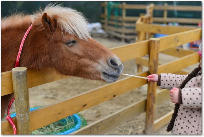五月山動物園のポニーに餌をやる女の子
