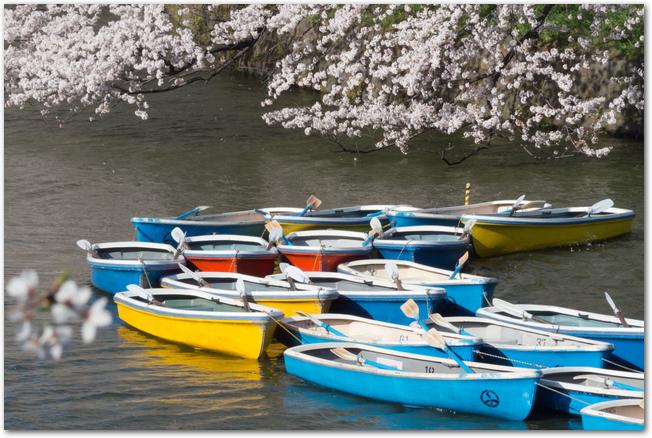 満開の千鳥ヶ淵の桜とボート