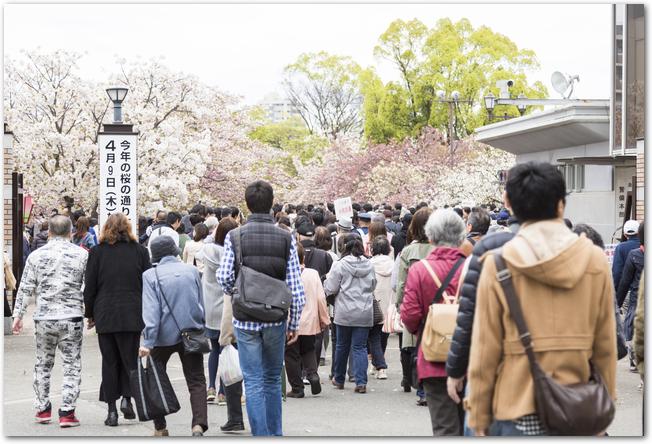 大勢の人で混雑する大阪造幣局の桜の通り抜け