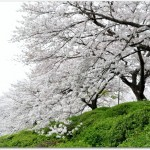 五月山公園はベビーカーでも大丈夫?桜を見るなら駐車場は?子連れには?