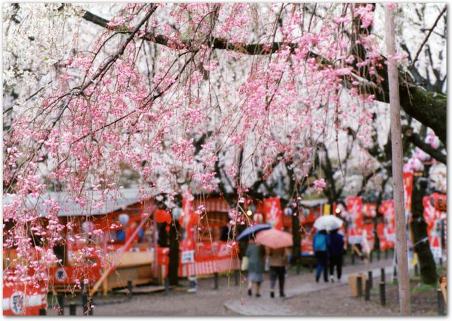 混雑している万博公園の桜の通り抜けの様子