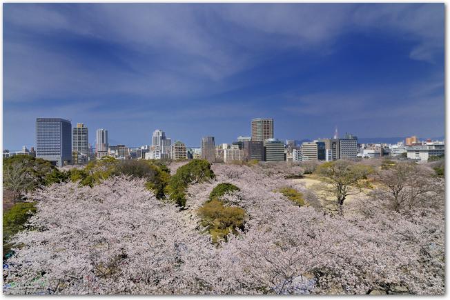 桜の時期の舞鶴公園の光景