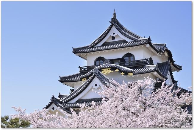 彦根城の天守閣と桜の花