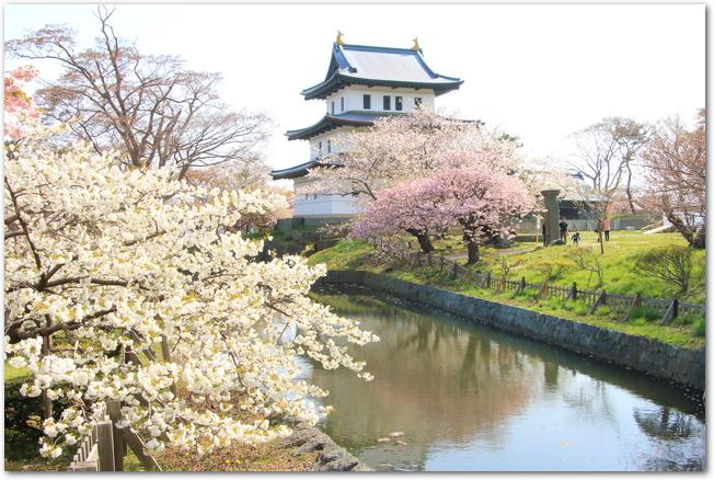 松前城と濠の側に咲く白とピンクの桜