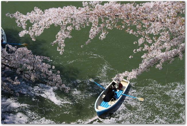 千鳥ヶ淵の満開の桜の下でボートに乗る様子
