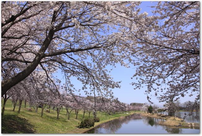 桜の時期に池ごしに東明公園と展望台を見た様子