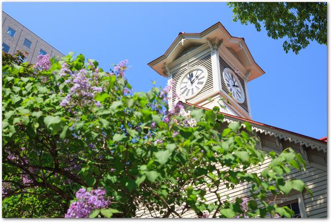 さっぽろ時計台とライラックの花