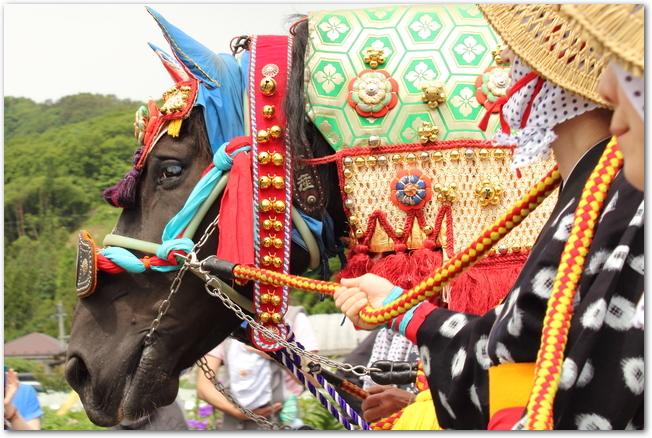 チャグチャグ馬コの伝統的な衣装をまとう人と馬