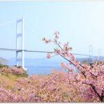 サンライズ糸山の河津桜がすごい人気?レストランもおすすめ?