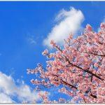 旭山公園へのアクセスは?桜のライトアップと花見攻略ポイント