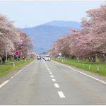 二十間道路桜並木の開花予想と桜まつりは?アクセスは?