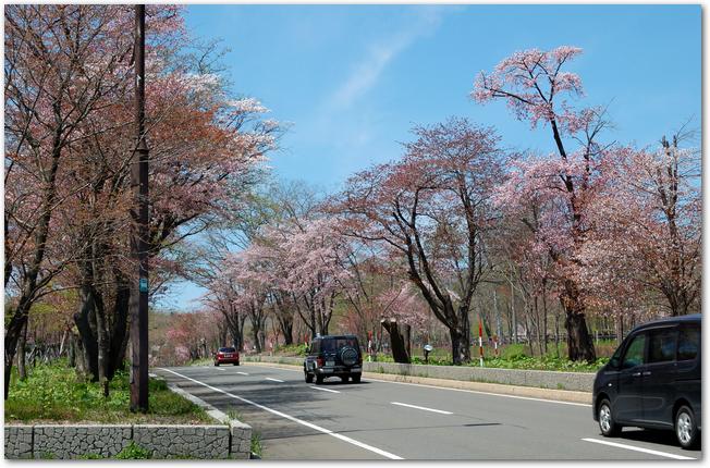 登別の道路の両側に桜並木が続いている様子