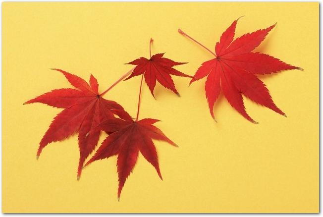 黄色い背景に置かれた赤い紅葉の葉