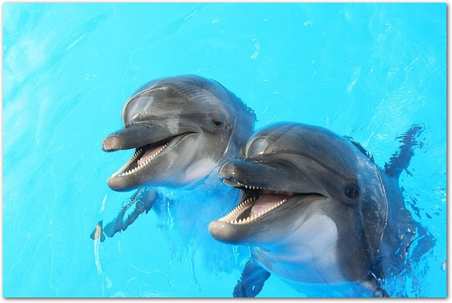 プールの水面から顔を出している2頭のイルカ