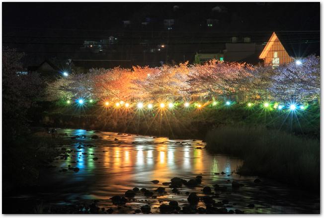 河津桜まつりでライトアップされた河津桜の様子