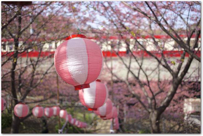 河津桜の桜並木に提灯が吊り下げられている様子