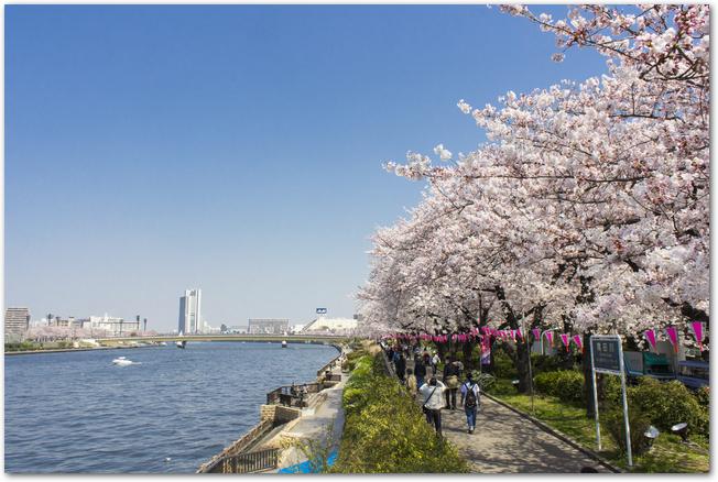 隅田川と隅田川公園に桜が咲いている風景