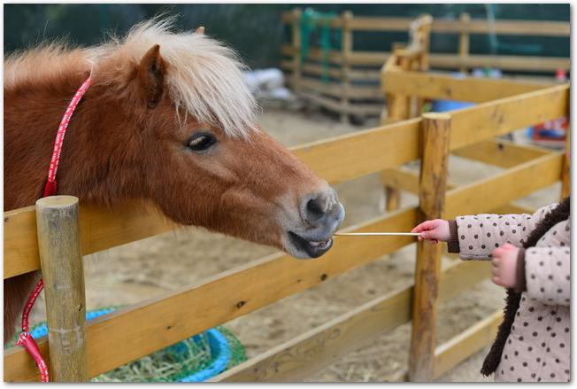五月山動物園でポニーと触れ合う子どもの様子