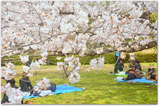 舞鶴公園でお花見をする人々の様子