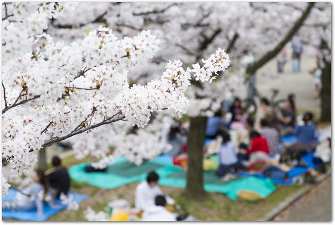 桜の時期の醍醐寺境内に置かれた緋毛氈の席に座る人々
