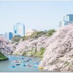 千鳥ヶ淵の桜の見ごろはいつ?夜桜ボートは?ライトアップは?