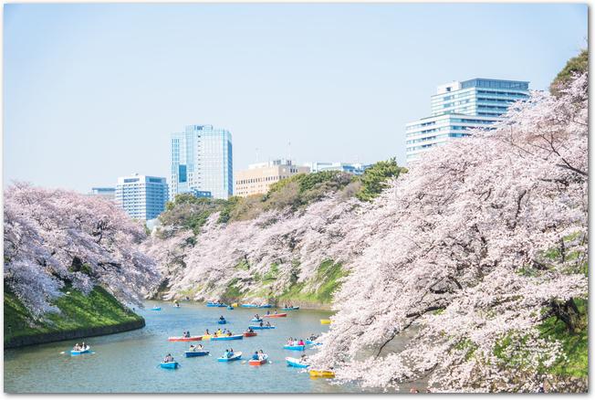 ボートが浮かぶ千鳥ヶ淵の水面と満開の桜