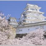 姫路城の花見の見頃は?場所取りが要る?夜桜を楽しめる場所は?