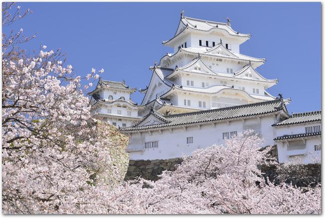 青空を背景に満開の桜ごしに見る姫路城