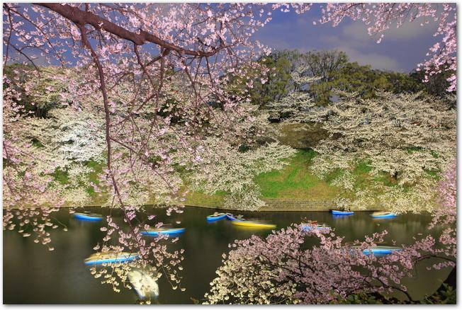 千鳥ヶ淵の夜桜とボート