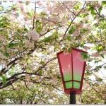 造幣局の花見で桜の通り抜けとは?交通アクセスは?飲食は?