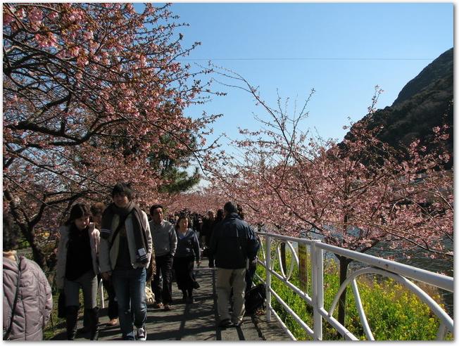 花見客で混雑する千鳥ヶ淵の様子