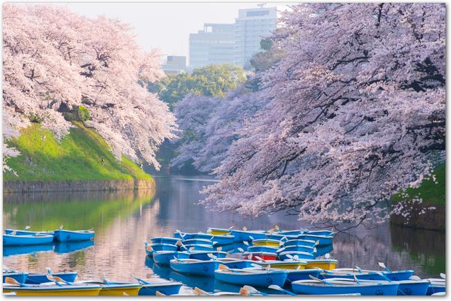 千鳥ヶ淵に浮かぶボートと満開の桜