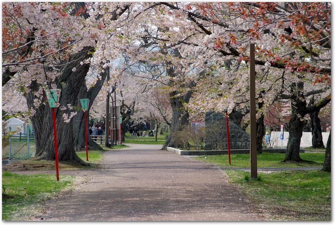 桜の時期の青葉ヶ丘公園の風景