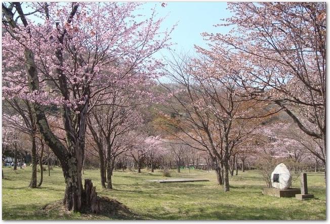 庶野さくら公園に咲く桜の木々