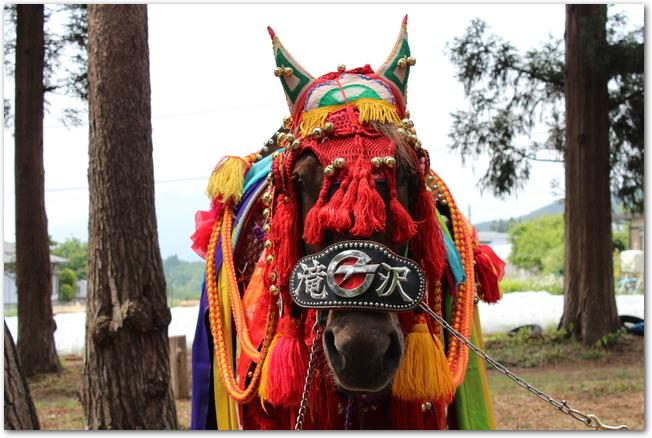 チャグチャグ馬コの衣装を着た馬が木に繋がれている様子