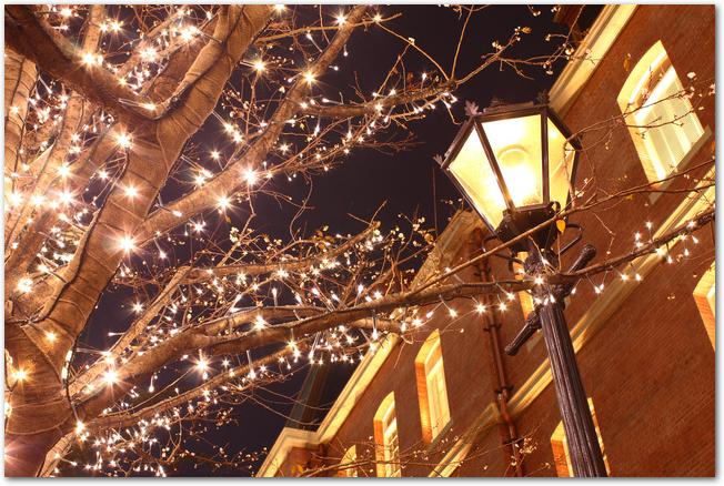 三菱一号館とライトアップされた丸の内の街路樹