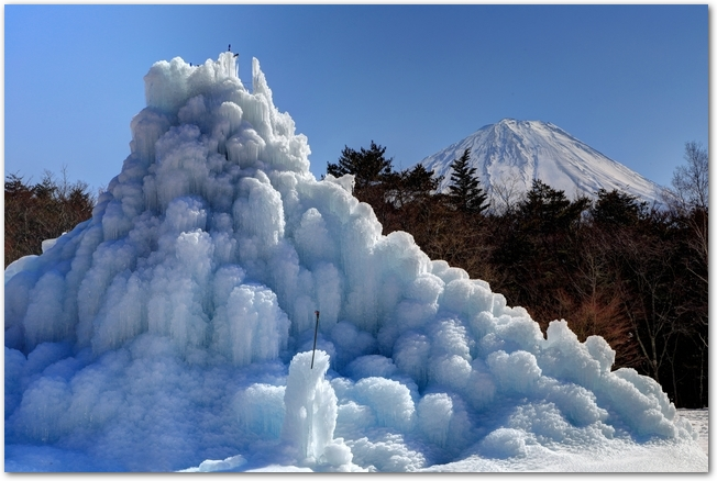 晴れた日の西湖樹氷まつりの樹氷と富士山