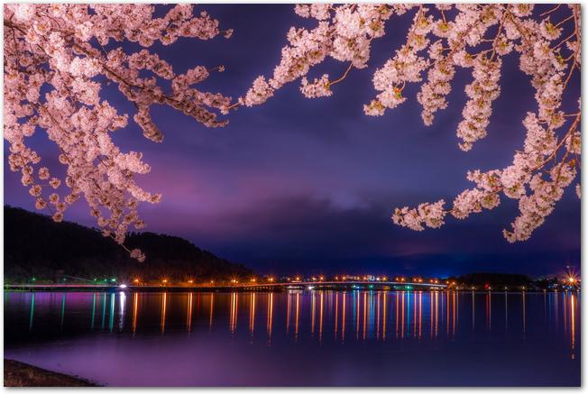 千波湖畔のライトアップされた夜桜の様子