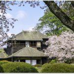 水戸の桜まつりの見どころ偕楽園は?千波湖畔の桜は?桜山公園は?