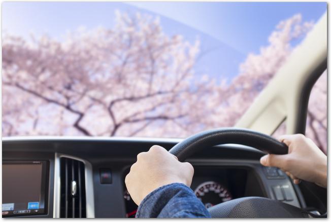 ドライブしている車の運転席から見た桜の様子
