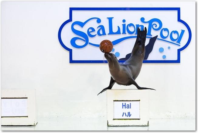 登別水族館のアシカショーの様子