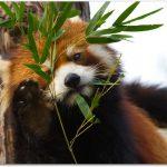 円山動物園へのアクセスと見どころは?赤ちゃん連れでのポイントは?